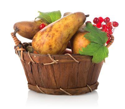 Pear and viburnum
