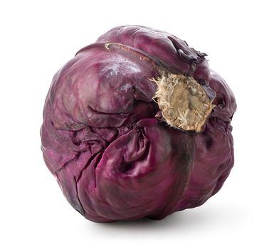 Whole purple cabbage