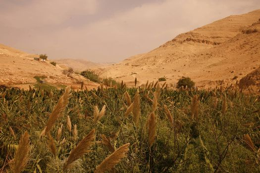 the Landscape near the City of Salt in Jordan in the middle east.