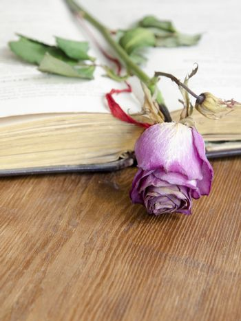 open vintage book with dry pink rose on it; focus on flower