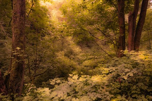 Beautiful Dense Forest