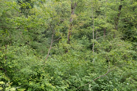 Very Thick Forest