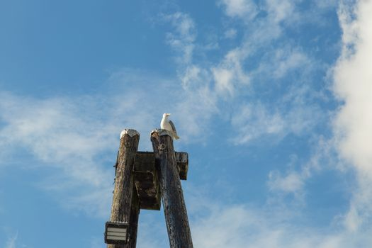 Seagull On A Pole