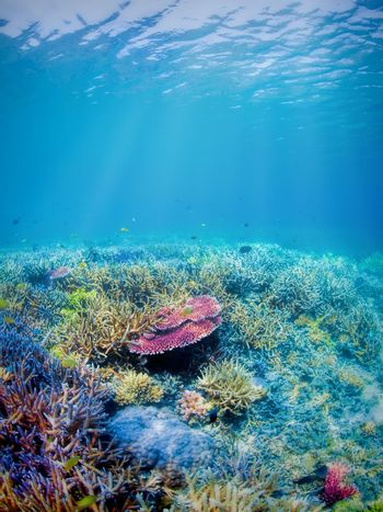 Colorful underwater coral reef on Komodo island