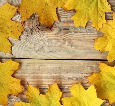 Marple leaves frame on wooden texture