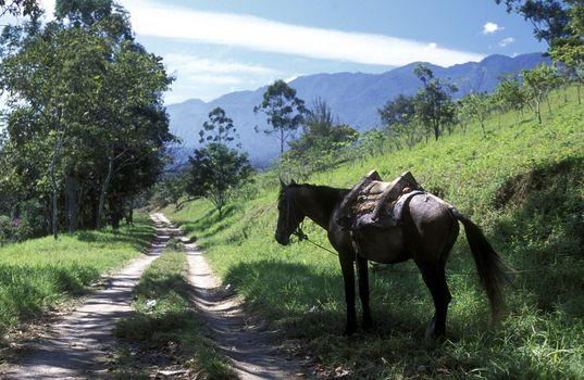 a Horse near the Village of Gracias in Honduras in Central America,