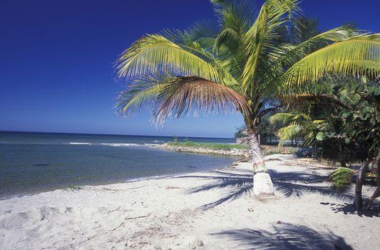 the Beach of Tela near San Pedro Sula on the caribian sea in Honduras in Central America,