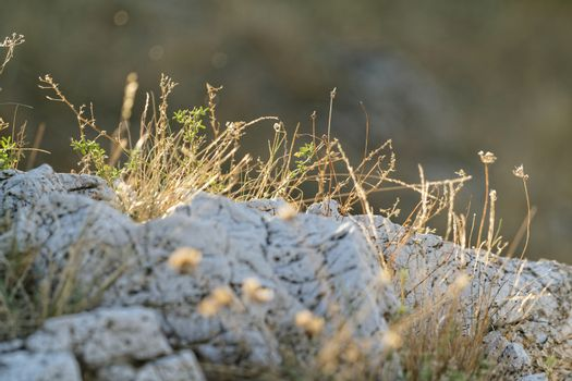 Barren rock