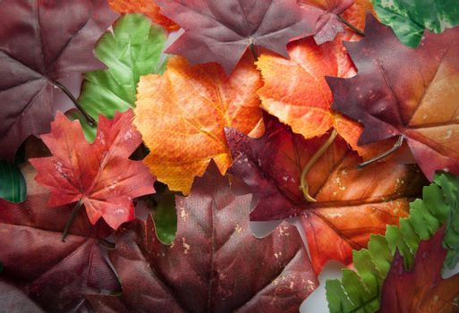 Autumn red, orange and green leaves background