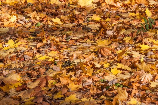 Colorful backround image of fallen autumn leaves