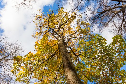 tree with yellow autumn leave
