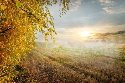 Fog in the field