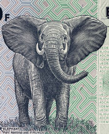 Elephant on 100 francs 2007 banknote from Congo.