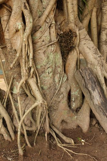 The root of trees.