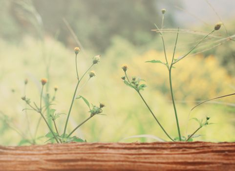 Little yellow flowers on wood with retro filter effect