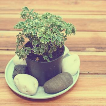 Fresh green plant for decorated with retro filter effect