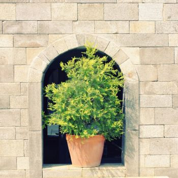 Green plant on stone wall with retro filter effect