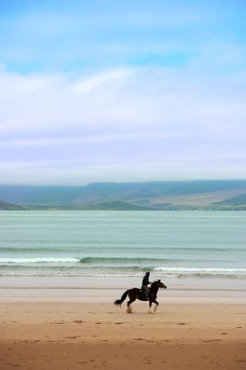 horse and rider at the maharees a beautiful beach in county Kerry Ireland