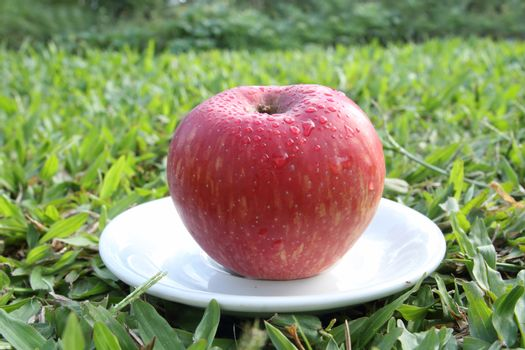 red apple on white dish