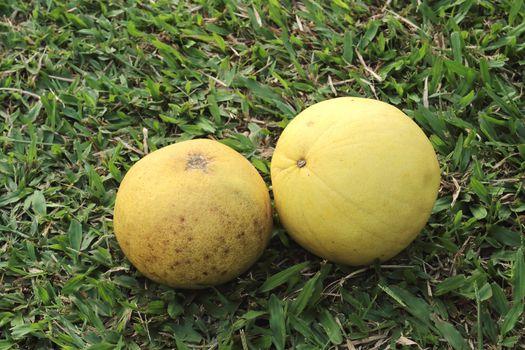 two ripe pomelo