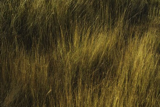 Sunrise Grass