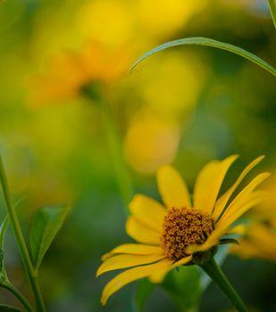 Bright Yellow Daisy Flower