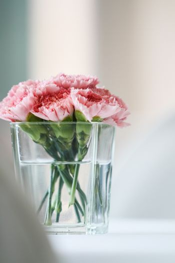 Bouquet of carnation flowers in glass vase