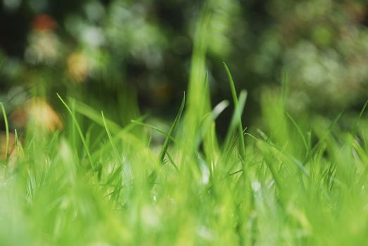 Blades of grass on a sunny day
