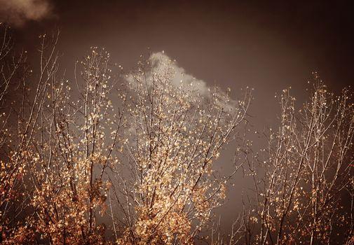 Autumn vintage trees