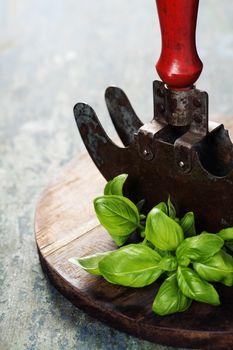 vintage herb cutting mezzaluna knife