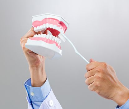 Dentist hold with denture and toothbrush