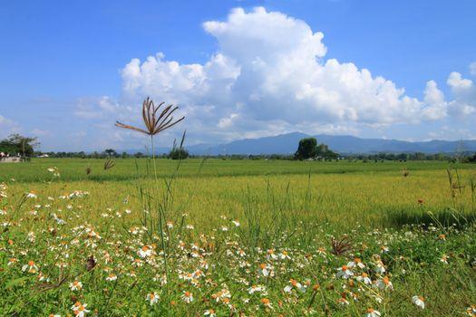 grassland and rice field