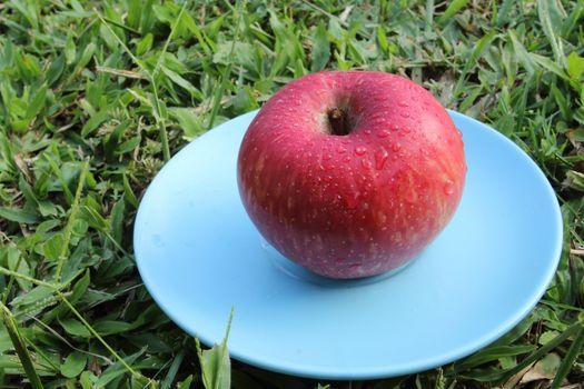 red apple on blue dish