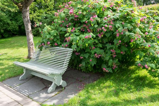 Lone bench in summer park