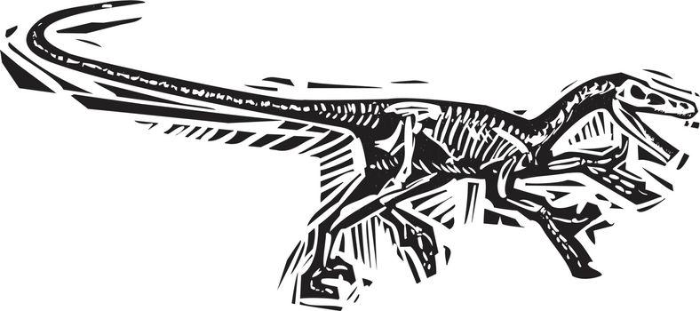 Running Velociraptor Fossil