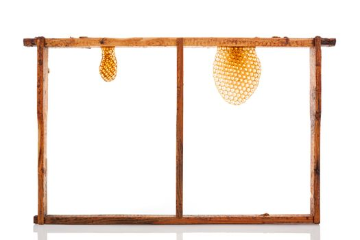 Honeycomb isolated.