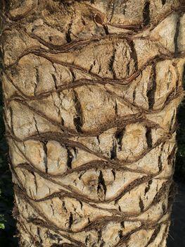 trunk tree pattern