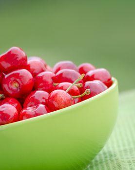 Juicy cherry on garden