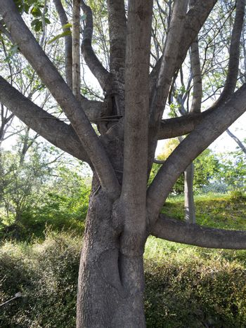 multiple branches tree