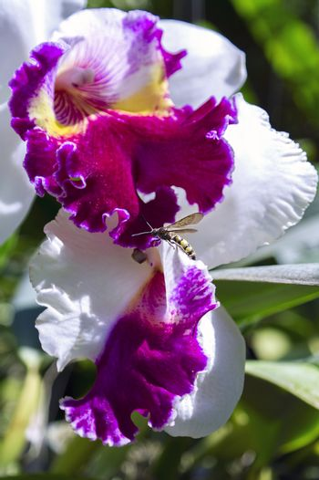 Bee and Orchid.