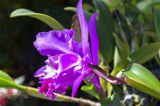 Flowers of Orchid.