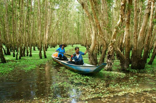 AN GIANG, VIET NAM- SEPT 22: Tra Su indigo forest, eco tourist area at Mekong Delta, traveler in green ecotourism, woman rowing the row boat, hyacinth cover water, tree flooded, Vietnam, Sept 22, 2014