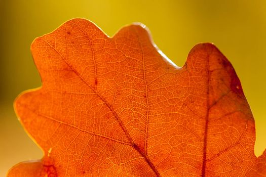 Colorful autumn leaves texture background