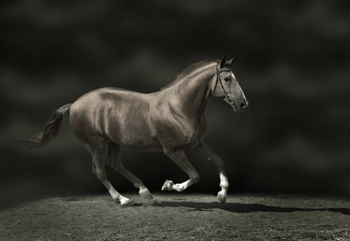Beautiful stallion on dark background, sepia-toned image