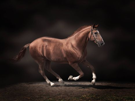 Beautiful stallion on dark background