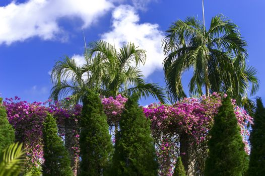 Tropical Palm Trees and Flowers.