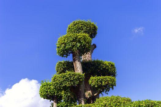 Top of Tree.