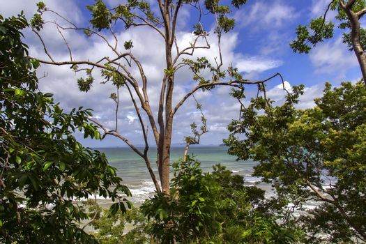 Trees on the Shore.