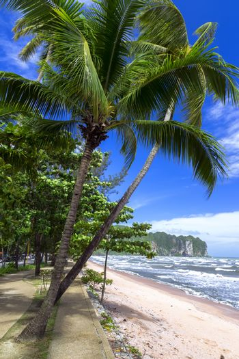 Palm Trees on the Shore.