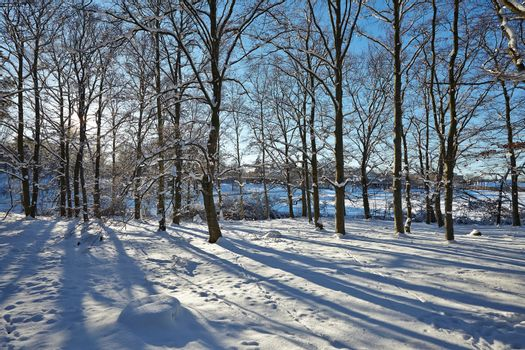 Winter trees in the park